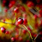 Berries_by_Orb9220