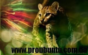 ubuntu_ocelot_wallpaper_xcf__s_by_hink_prod-d4cx93t