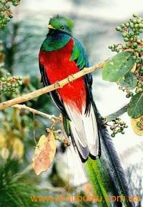 Ubuntu 12.10 - Quantal Quetzal