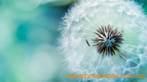 blue_dandelion_by_jaorizabal